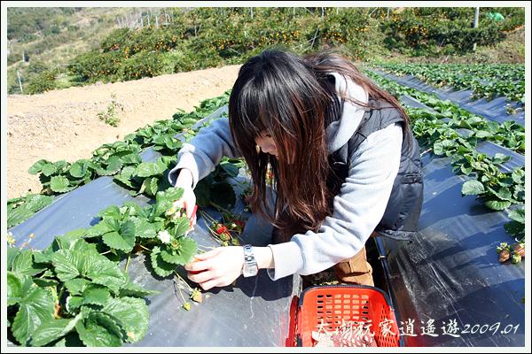 090117_04_採草莓