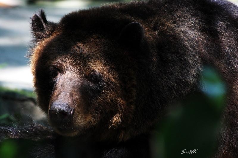 Bear @ National Zoo, KL, Malaysia