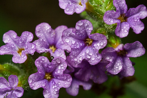 Dewdrops on flowers