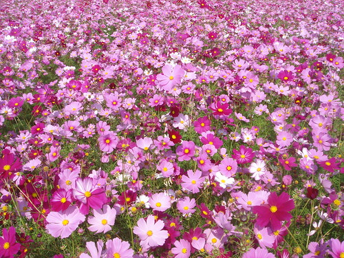 Flowers in Meinong