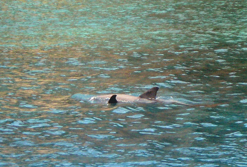 baby dolphin2