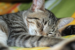 (carla.wie) Tags: cat 50mm nikon sleep gato 2009 sono dormindo 50mm18 nikkor50mm nikkor50mm18 d80 carlawie nikond80 january2009 janeiro2009