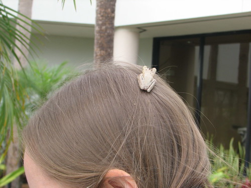 Kathryn Cramer & cuban tree frog