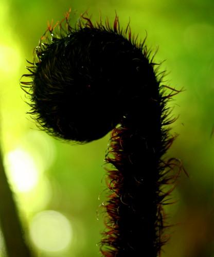 Kuru from the kiwi bush - New Zealand