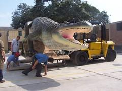 siendo depositado en su ambiente del Museo de Historia Natural