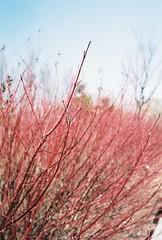 붉게 물든 봄