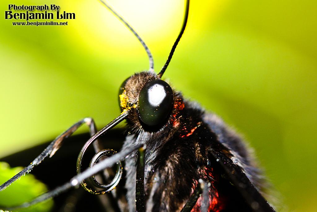 butterflyfarm01_03