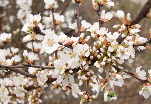 Spring Awakening 02