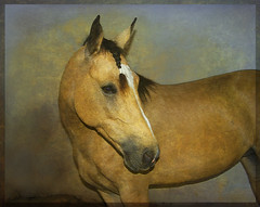 Libby my Friend. A gentle Lady with a Marvelous Soul. (itala2007) Tags: friends horse animals mare special explore magical gentle explored flickrsbest mywinners abigfave seeninexplore itala2007 oraclex imagesforthelittleprince worldsartgallery arttouch inamoramento