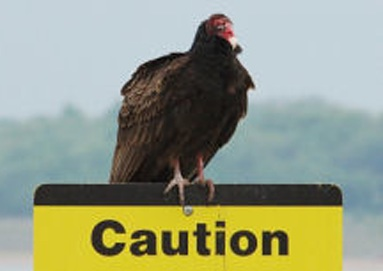 vulture caution