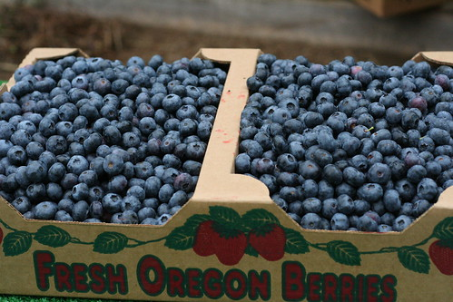 Berry Picking: Blueberry Edition