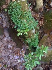16 - Ecosystem on a Rock