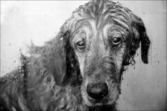 Crying (James_Jackson) Tags: love wet girl goldenretriever shower blackwhite pattern sad mourning iso400 crying mo manual uncropped f40 canoneos5d flashfired ef24105mmf4lisusm thyroidcancer 0ev 1100sec 96mm zaqq 1100secatf40
