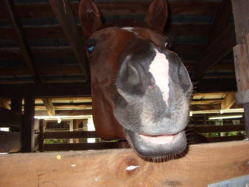 hello horsie