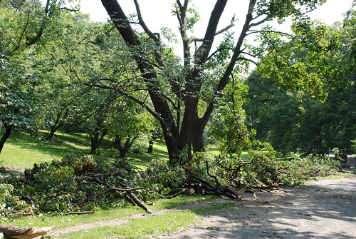 Clearing the Storm Damage in Central Park