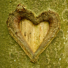 (mioke) Tags: wood tree green heart bark
