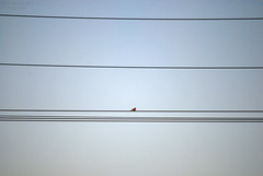 (Nikki Kristine) Tags: blue red sky bird outside one wires single lone telephonewire