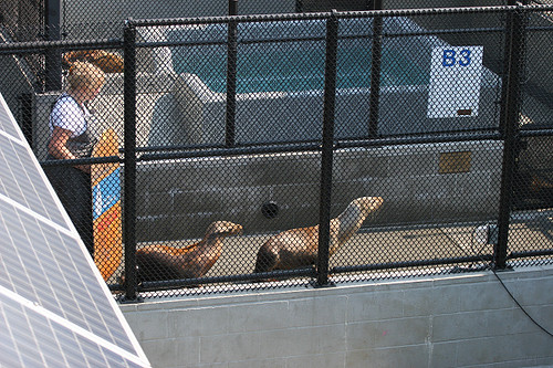 Sea lion herding
