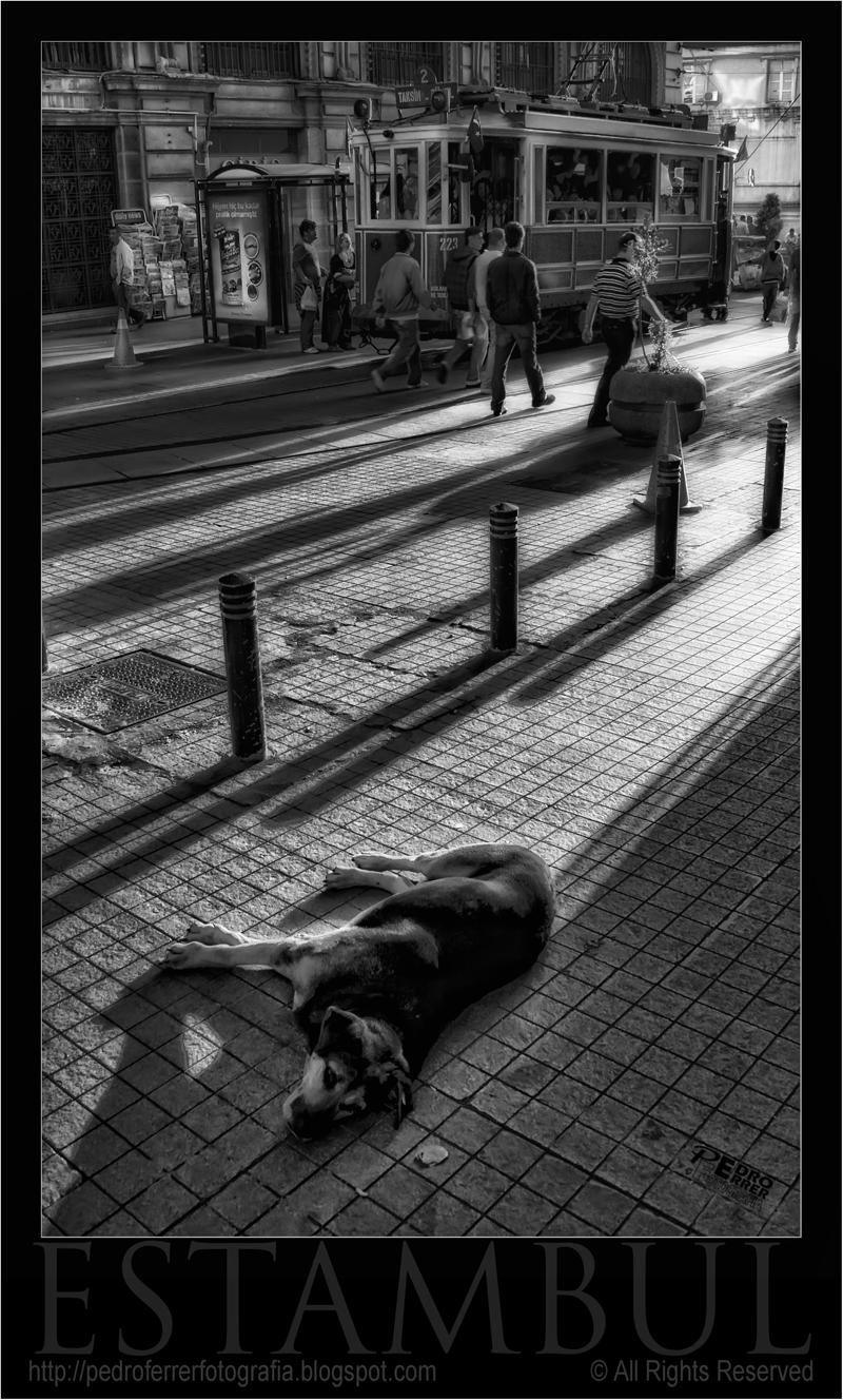 Tranvia y perro en Istiklal Caddesi - Estambul