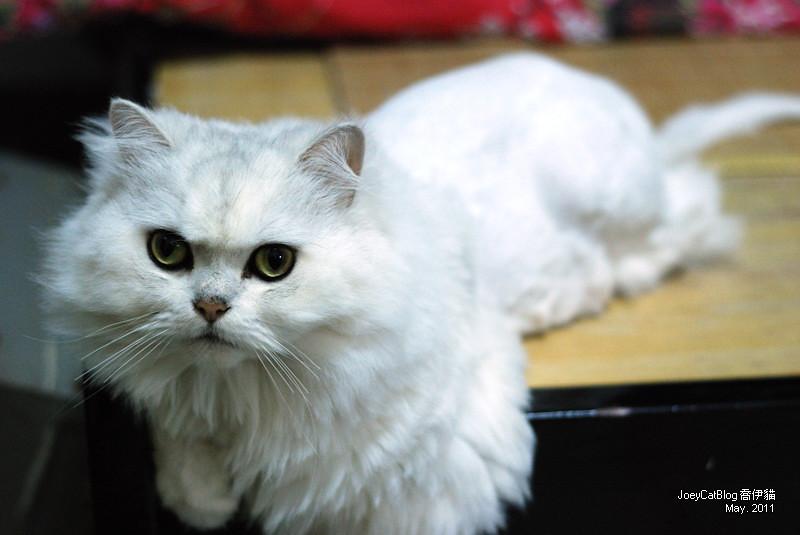 CAT_米米_2011_may__DSC_1152