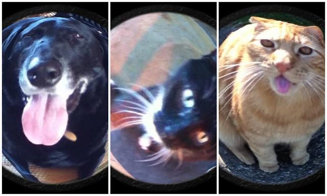 Fisheye characters