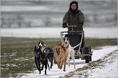CH-Schlittenhunde-Team