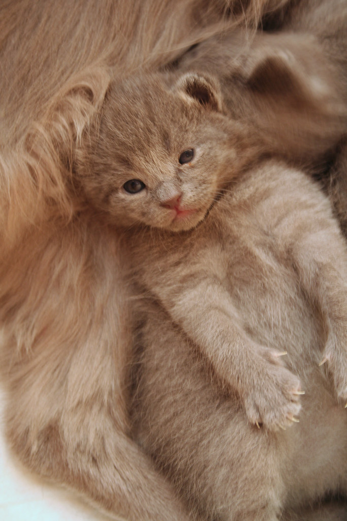 Kittens of Pegusha 3186994453_7ff8b72cd5_b