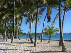 Gwada - Guadeloupe (@claudiamafalda) Tags: beach caribbean plage spiaggia guadeloupe antilles gwada caraibi caravelle westindies guadalupa