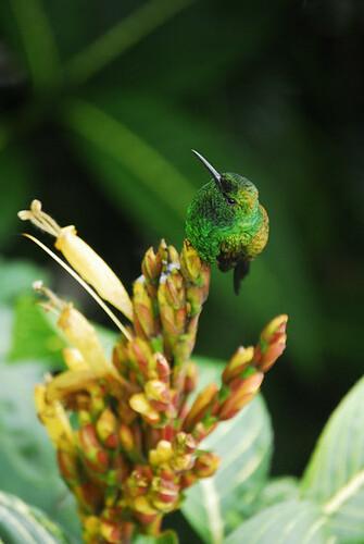 upsidedown humming bird
