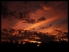 Heaven in the sky!! (Amar Jain) Tags: sky silhouette evening pilani