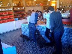 Happy dogs on leashes at intelligentsia