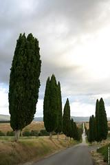 IT07 1396 Bagnaia (Templar1307 | Galerie des Bois) Tags: morning travel trees summer italy sunrise europe italia eu tuscany cypress daybreak 2007 tuscano bagnaia  borgolabagnaia