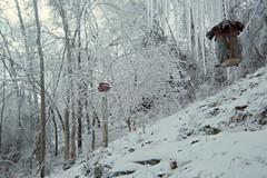 The woods behind the house (junebug_1944) Tags: icestorm eurekaspringsar january2009