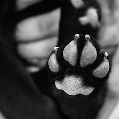 footprint (Jorge Romen) Tags: blackandwhite bw dog pet pets white black blancoynegro dogs animals canon puppy jack photography rebel blackwhite labrador path whiskey el retriever bn perro monocromatic salvador labradorretriever elsalvador mascota footprint esa xsi blanconegro monocrome desaturada 450d jromen jromenphotography monoromatic monocrmatico salvadoreanphotographer
