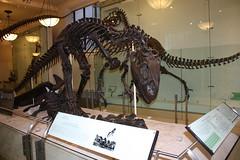 Anglų lietuvių žodynas. Žodis carnosaur reiškia karnosauras lietuviškai.