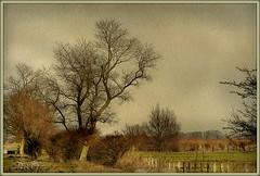La plaine Flamande