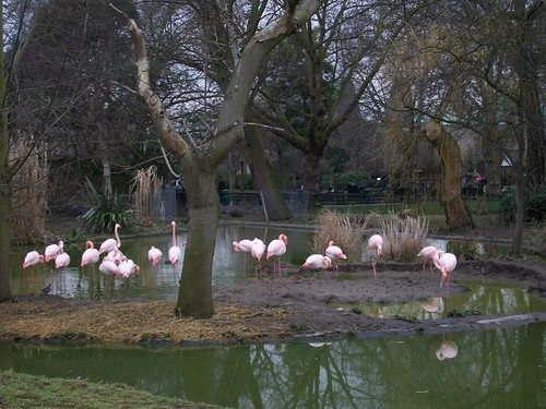 london zoo__0174
