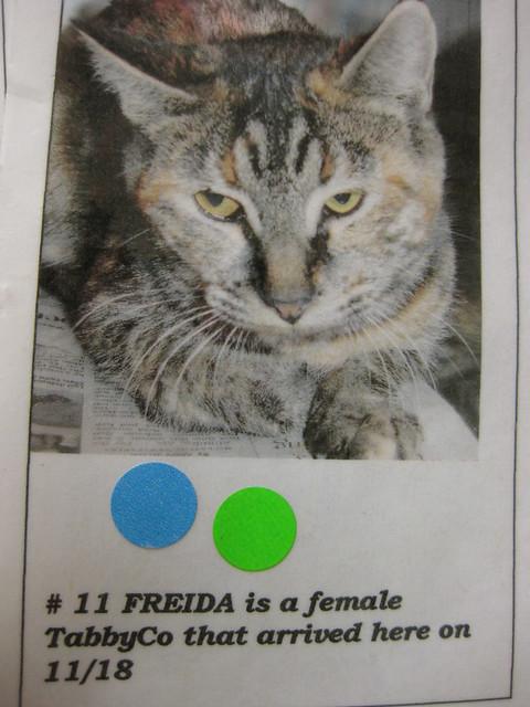 11 Freida  112217 by MendocinoAnimalCare