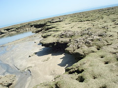 DSC03513 (ekbatan_guy) Tags: sea beach nice sand iran location seafood persiangulf qeshm nicebeach nicelocation