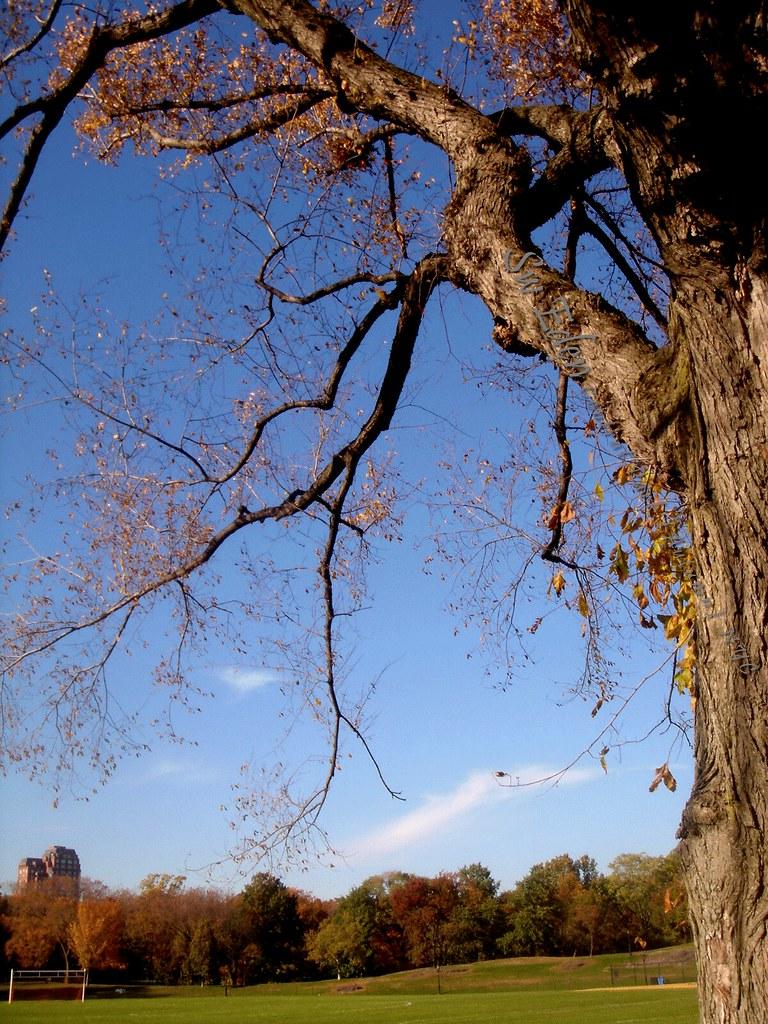 Ballfeild Central Park East