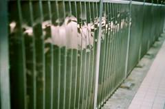 The shadow (Ronironic) Tags: fence railing tst  onthebridge fujixtra800 hunghum minoltaxd7  shadowofleaves