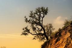 equilibrio (5millas_fjot) Tags: campodegibraltar treesubject cdgexplorer