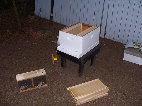the package of bees next to the hive