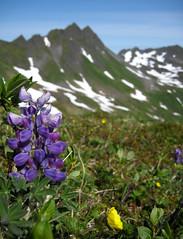 Day-186 (mandalit) Tags: alaska ak kodiak