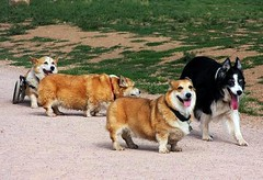 family outing in the dog park (by: BL 1961/Beverly, creative commons license)