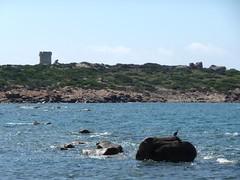 Vers la tour d'Ulmetu : la tour et le cormoran