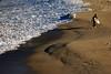 _DSC7378 (zzzoz) Tags: ocean sea beach bondi coast sydney australia