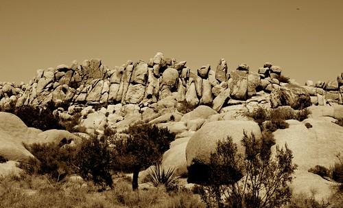 Rock Line-Up