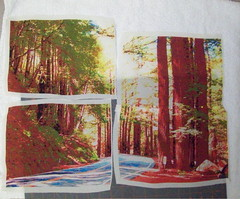 Redwood photo on silk in sections (jeanneaird) Tags: embroidery artquilt digitalprintingonfabric