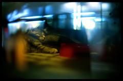 Sleep tight (Lefty Jordan) Tags: light hk pet baby reflection film window shop night cat hongkong kodak bokeh sleep fg20 wanchai gc400 50mmf12